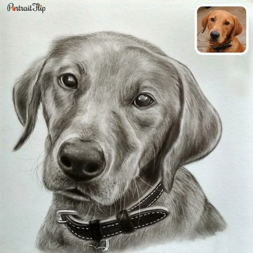 Handmade Pet Pencil Sketch