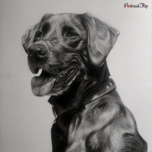 Pet Charcoal Portraits