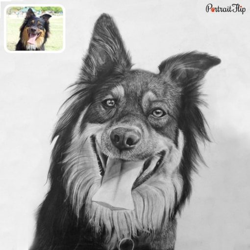 Pet Charcoal Drawing