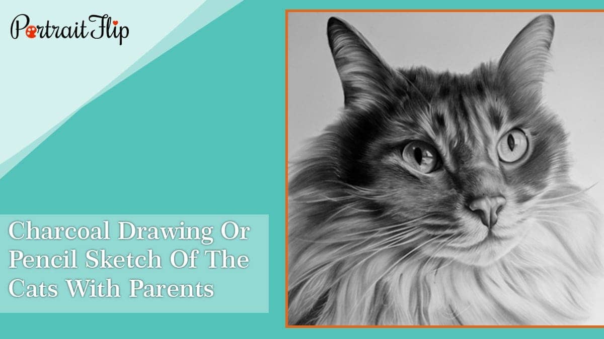 Charcoal drawing or pencil sketch of the cats with parents
