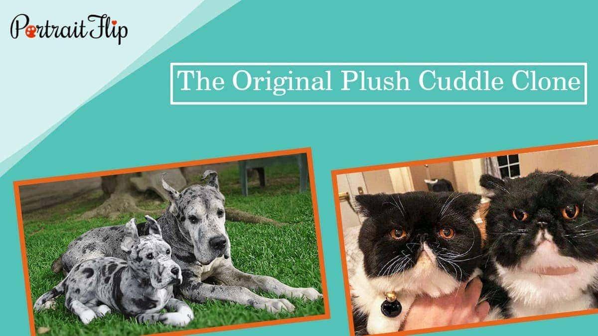 The original plush cuddle clone
