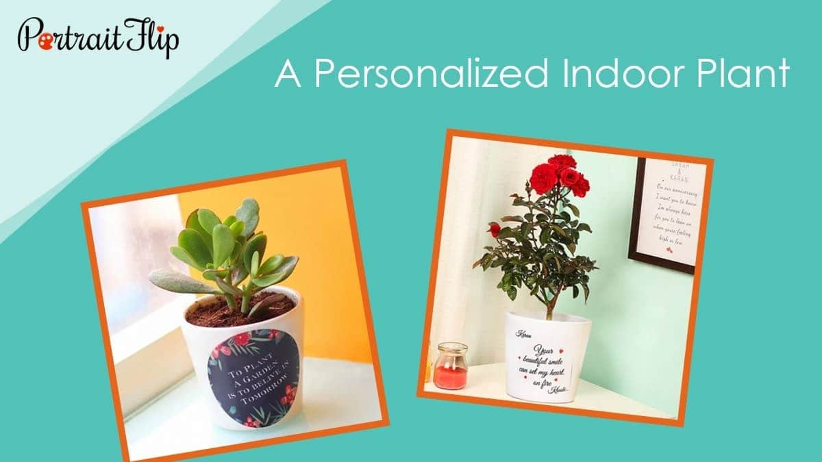 A personalized indoor plant