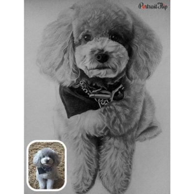 Charcoal sketch pet portrait (2)