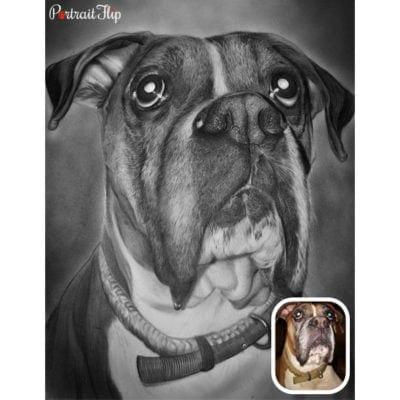 Charcoal sketch pet portrait (3)