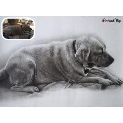 Charcoal sketch pet portrait