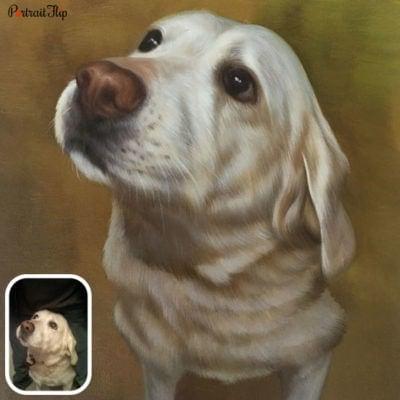 Pet oil portrait from photo (4)