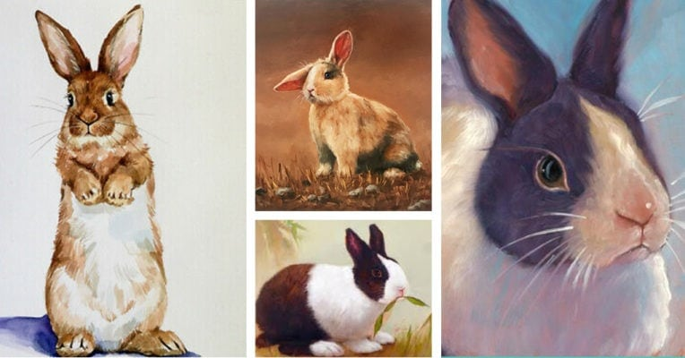 Rabbit portraits