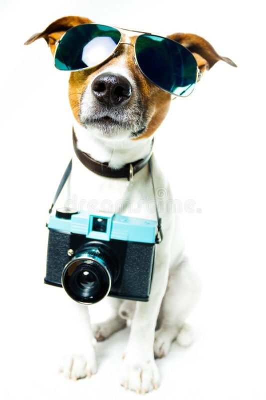 Pet photos and pet photography