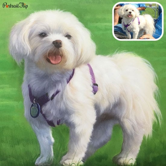 A pet portrait from photo