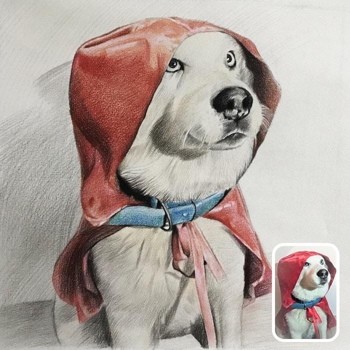 dog colored pencil portrait