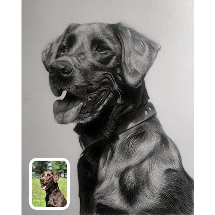 labrador charcoal portrait