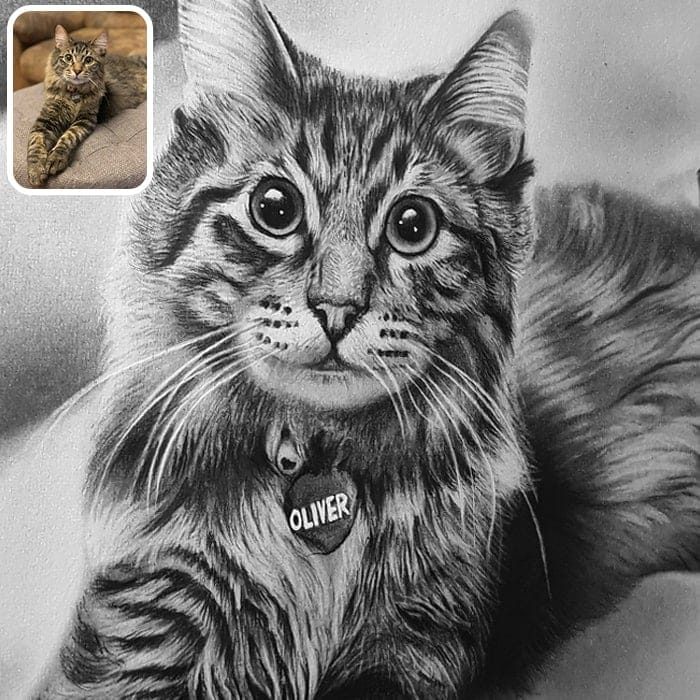 cat charcoal portrait