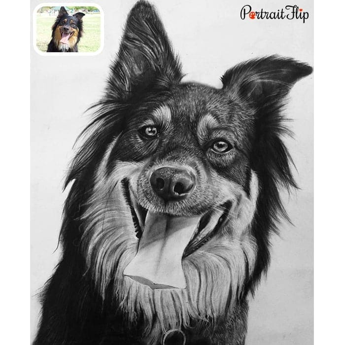 laughing dog charcoal drawing