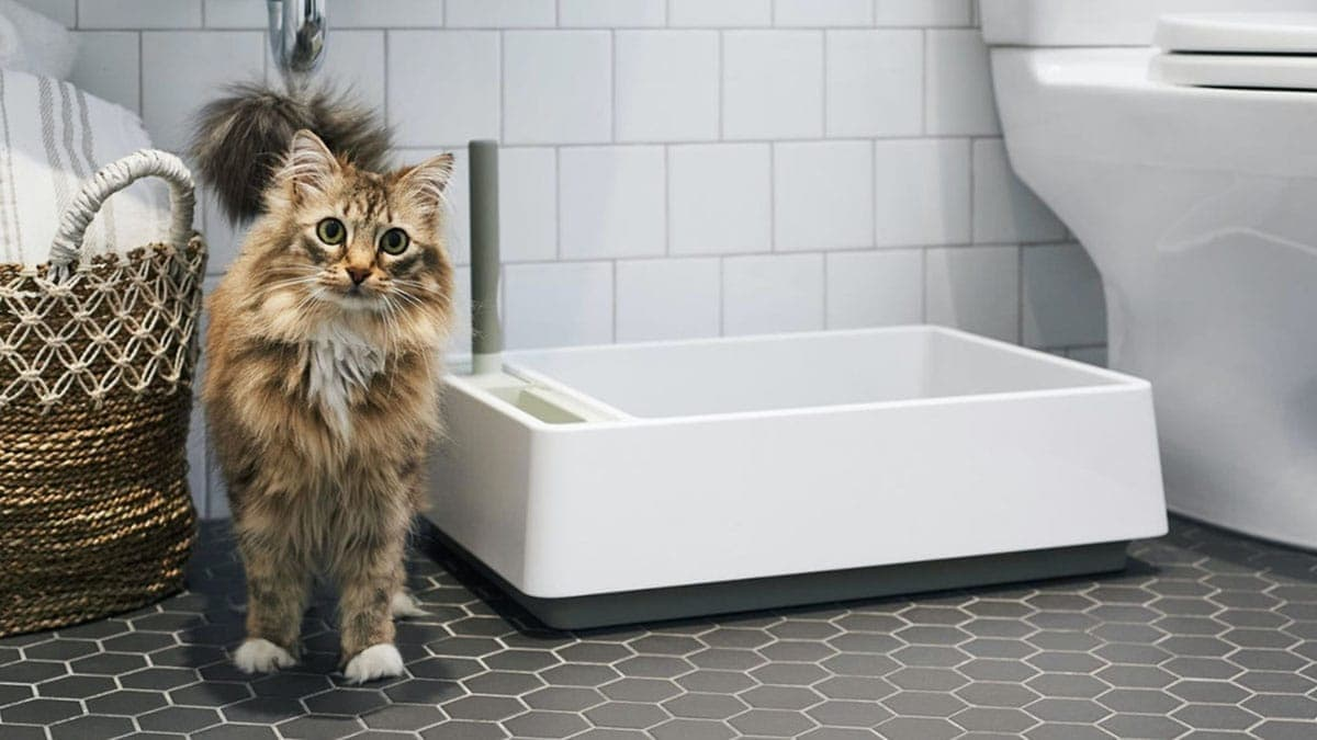 Cat Litter Box with A Cat