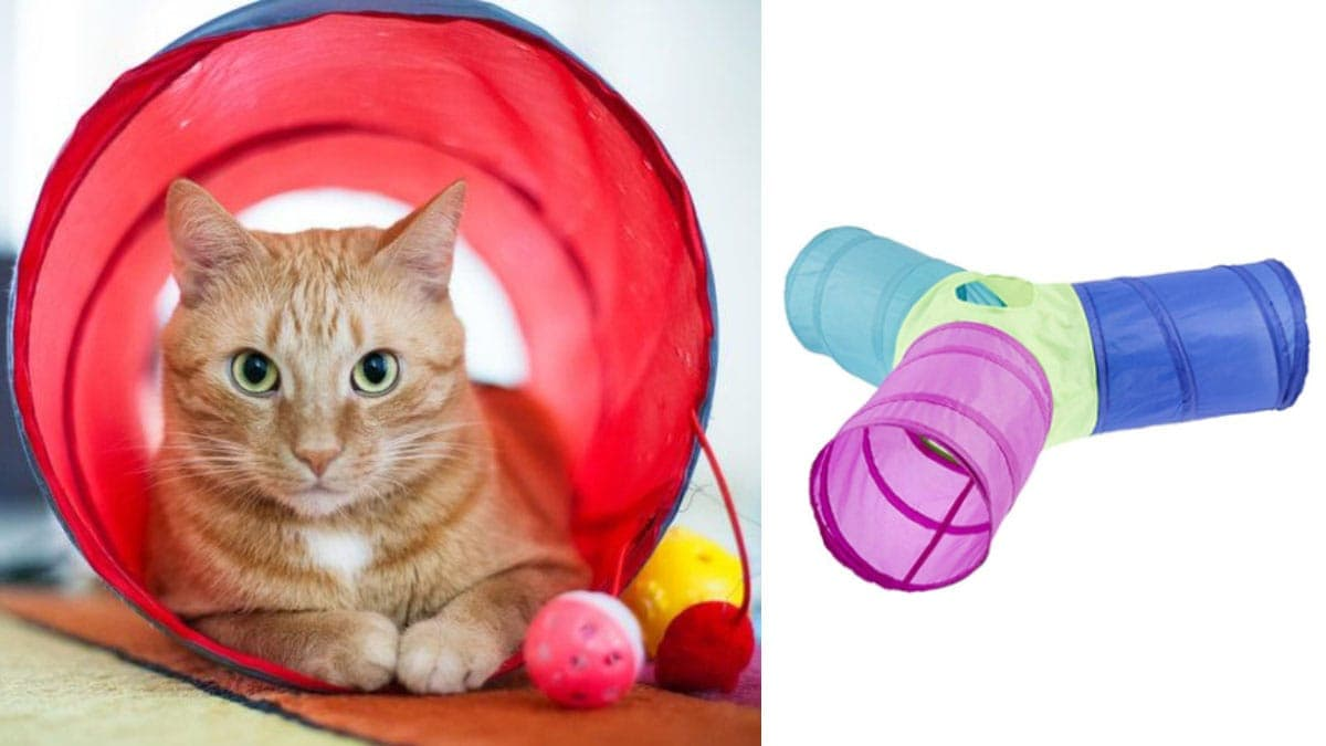 Cat chute for cats