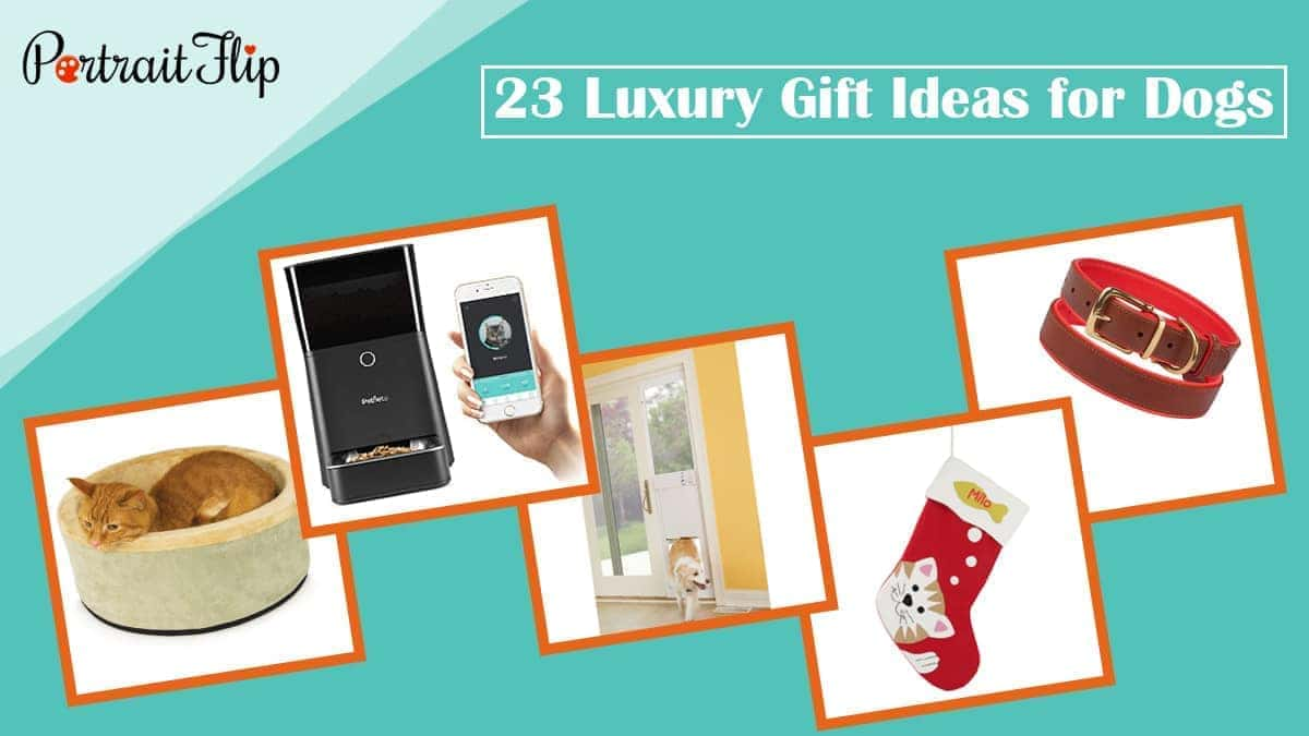 23 luxury gift ideas for dogs