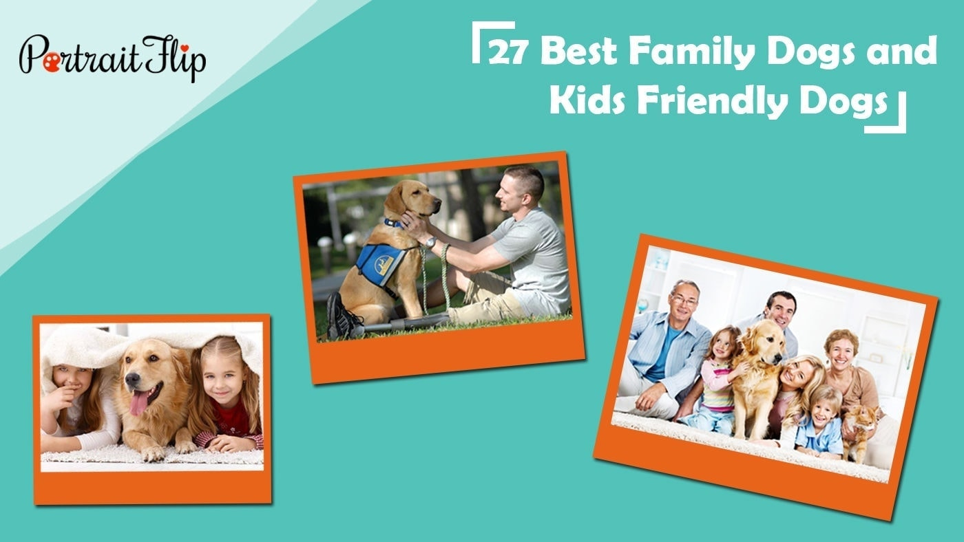27 best family dogs and kids friendly dogs