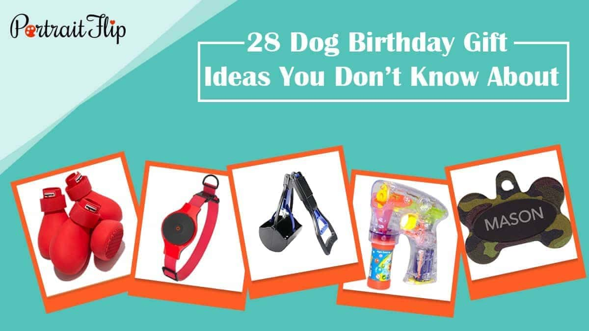 28 Dog Birthday Gift Ideas You Dont Know About