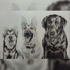 3merge dogs 01