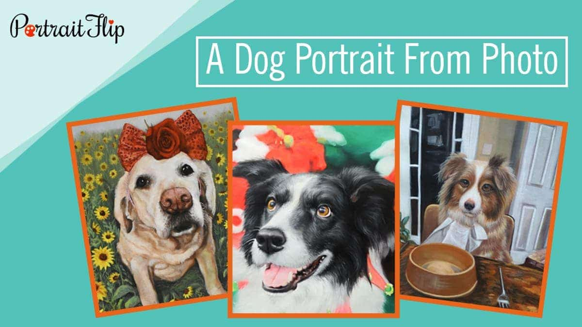 A dog portrait from photo