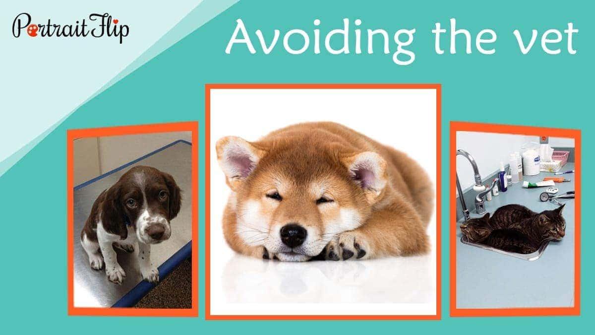 Avoiding the vet