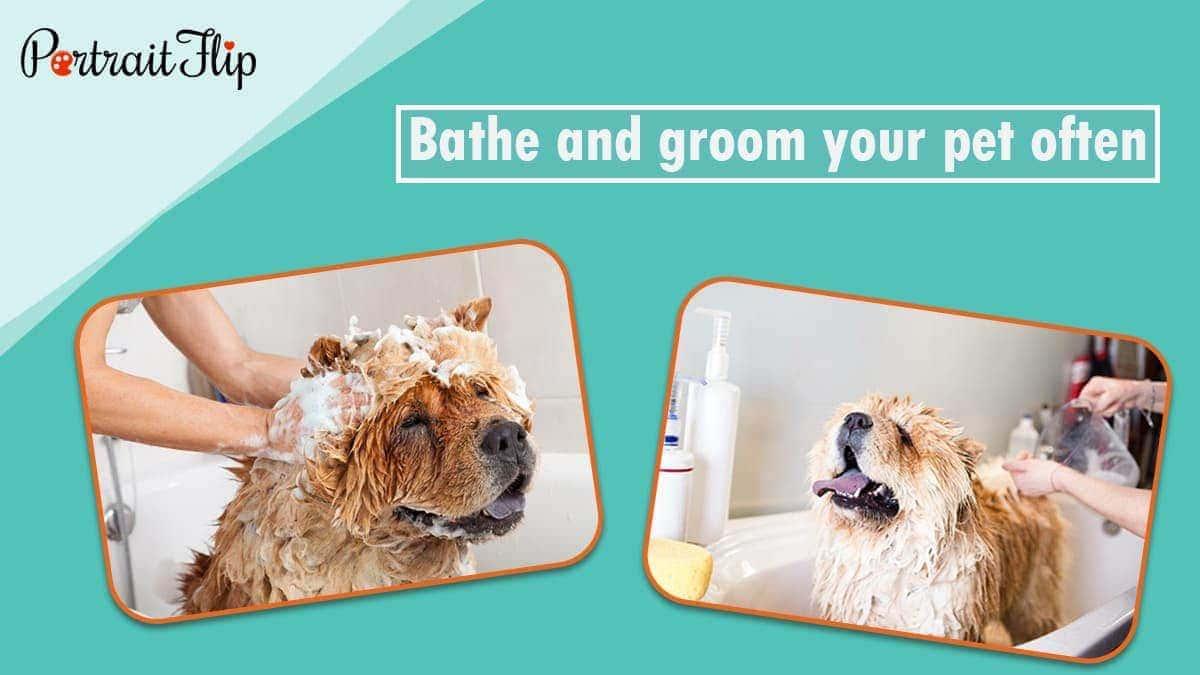 Bathe and groom your pet often