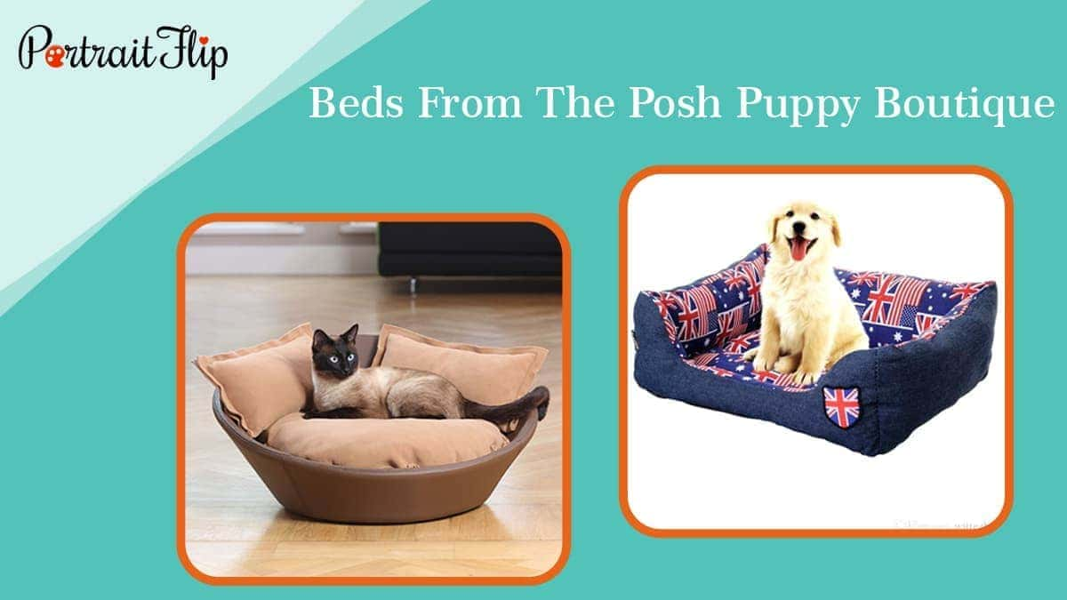 Beds from the posh puppy boutique