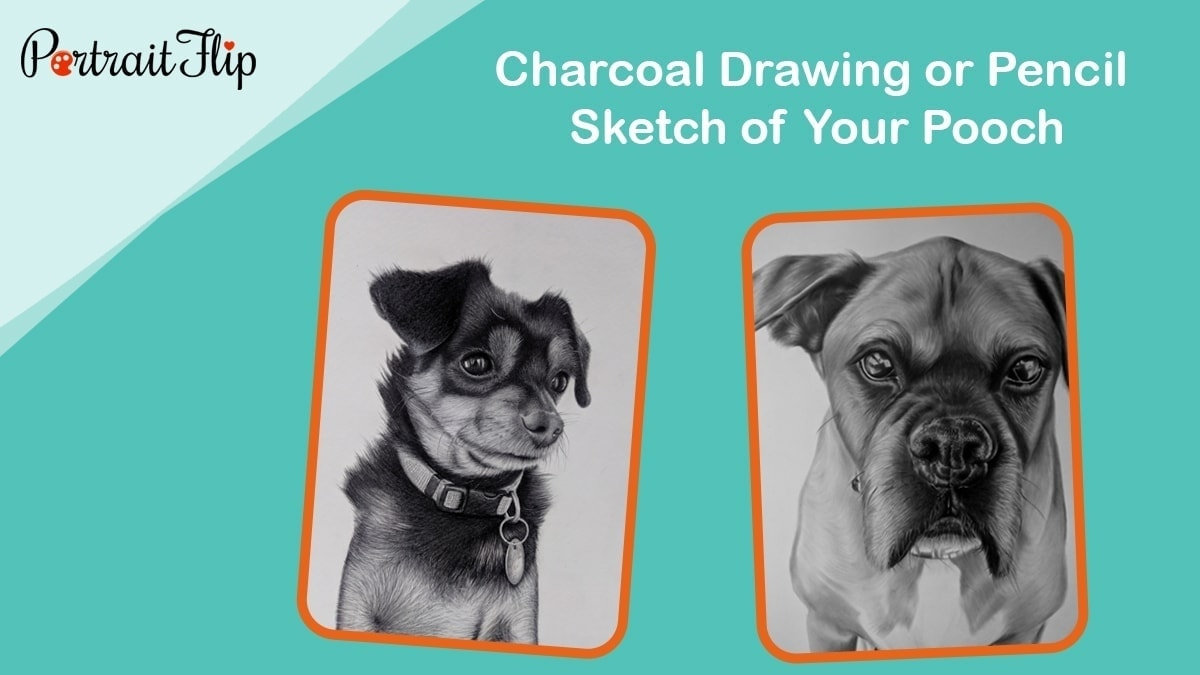 Charcoal drawing or pencil sketch of your pooch