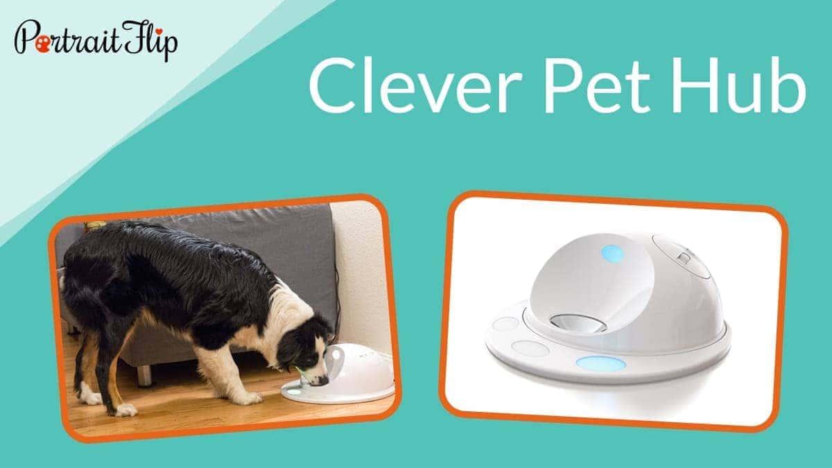 Cleverpet hub