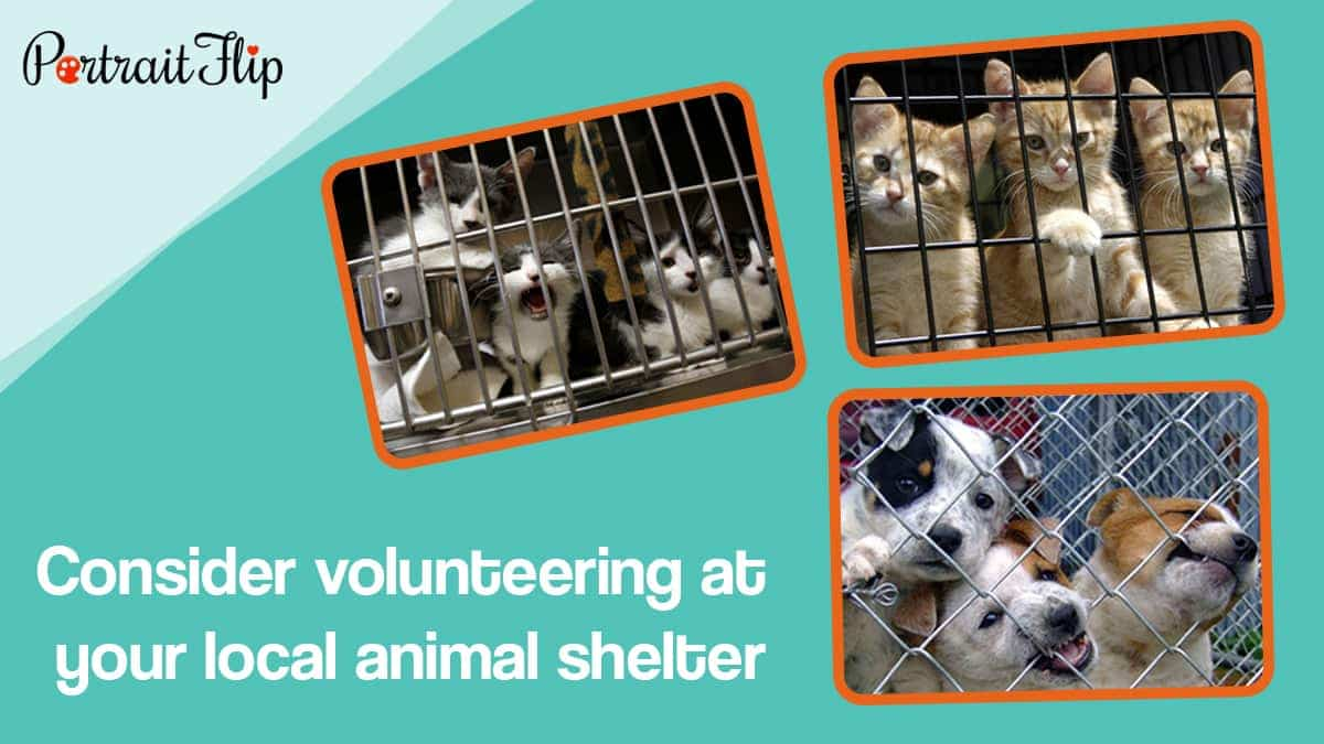 Consider volunteering at your local animal shelter