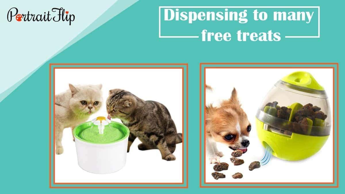 Dispensing to many free treats