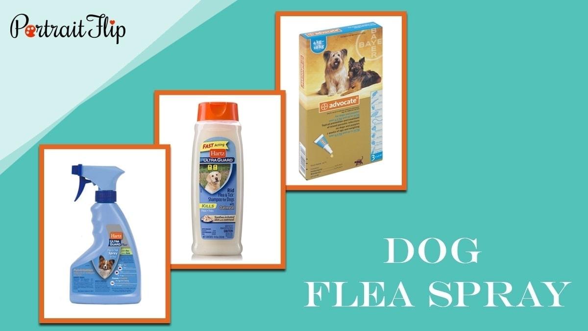 Dog flea spray