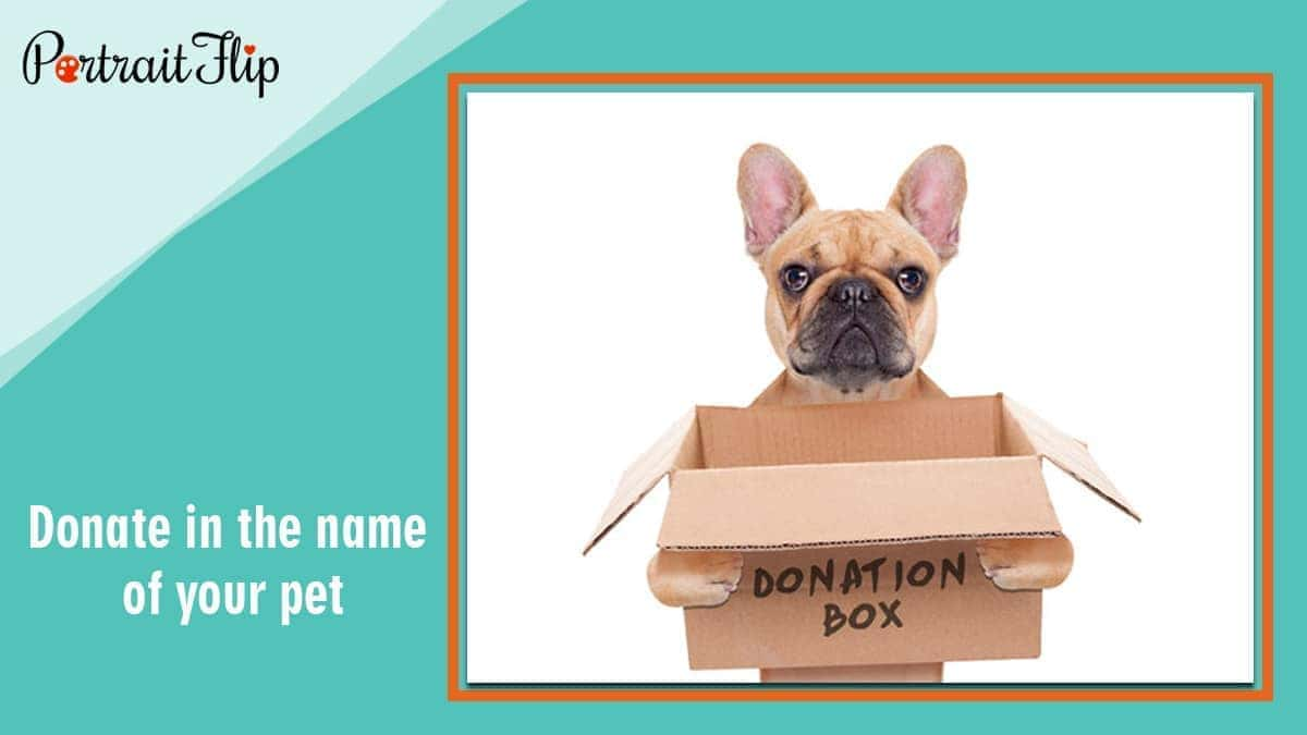 Donate in the name of your pet