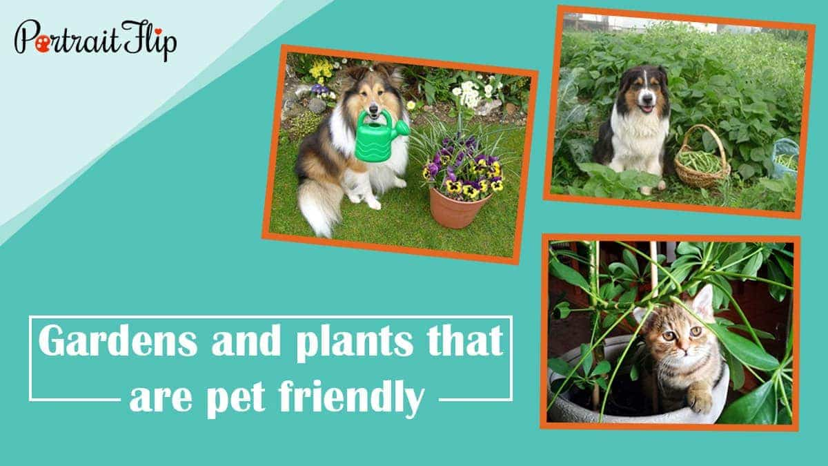 Gardens and plants that are pet friendly