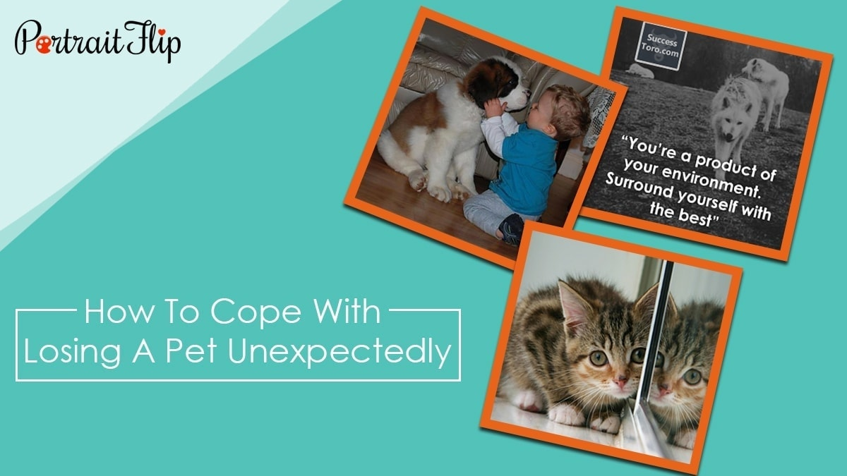 How to cope with losing a pet unexpectedly