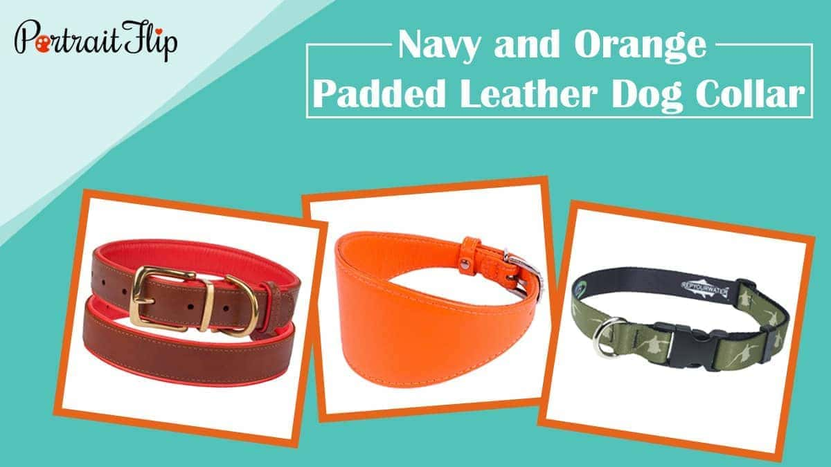 Navy and orange padded leather dog collar