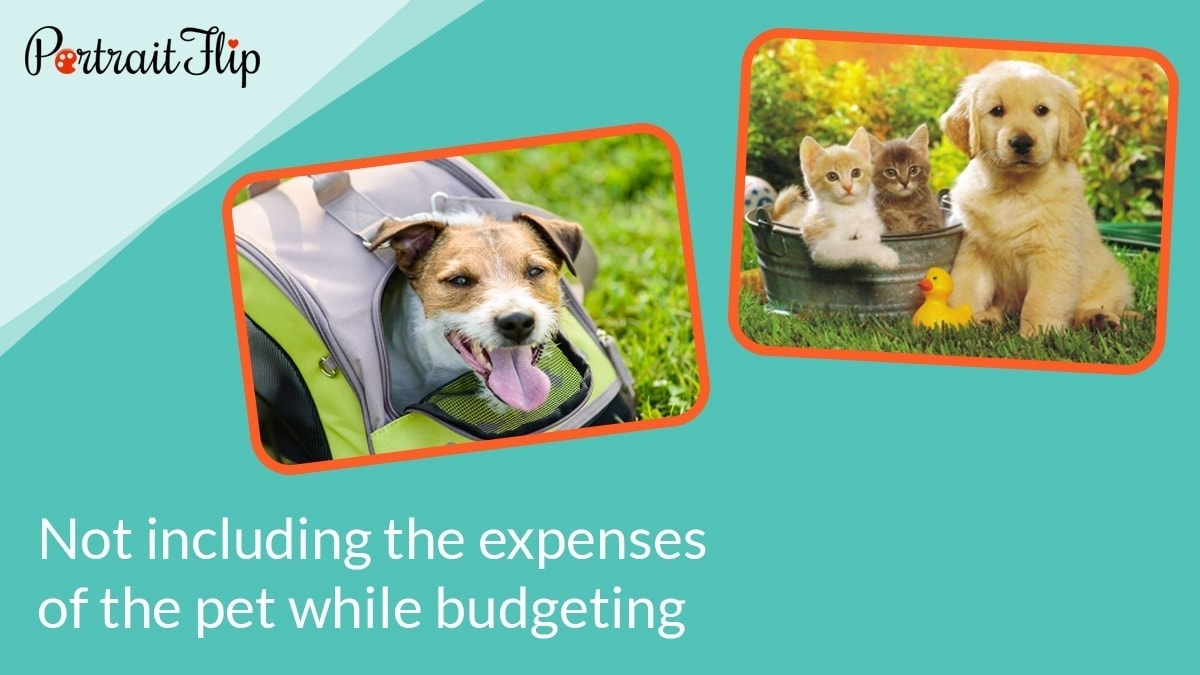 Not including the expenses of the pet while budgeting