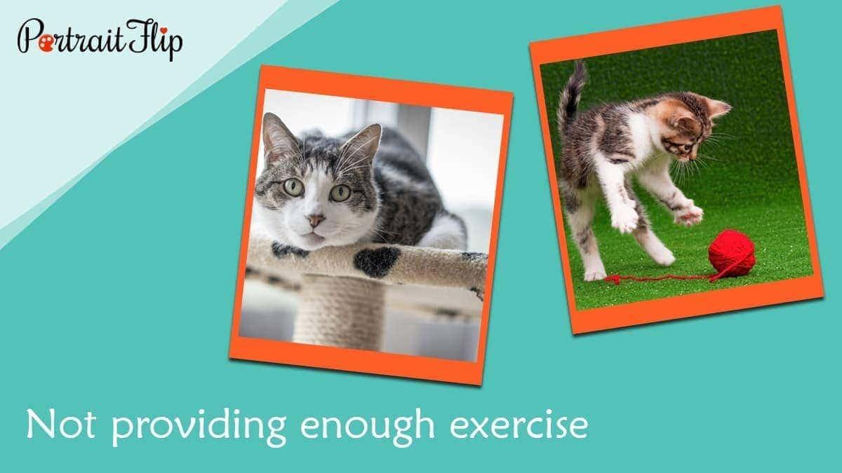 Not providing enough exercise