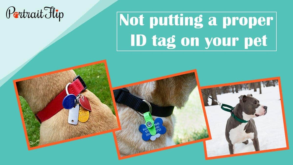 Not putting a proper id tag on your pet