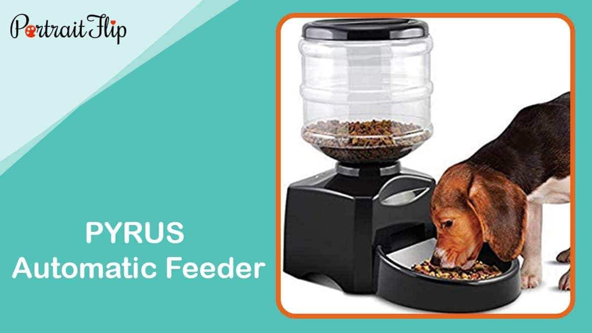 Pyrus automatic feeder