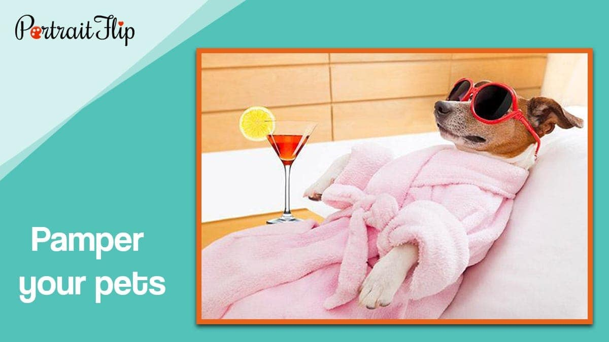Pamper your pets