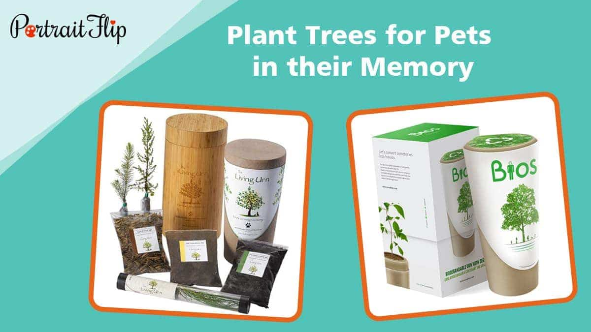 Plant trees for pets in their memory