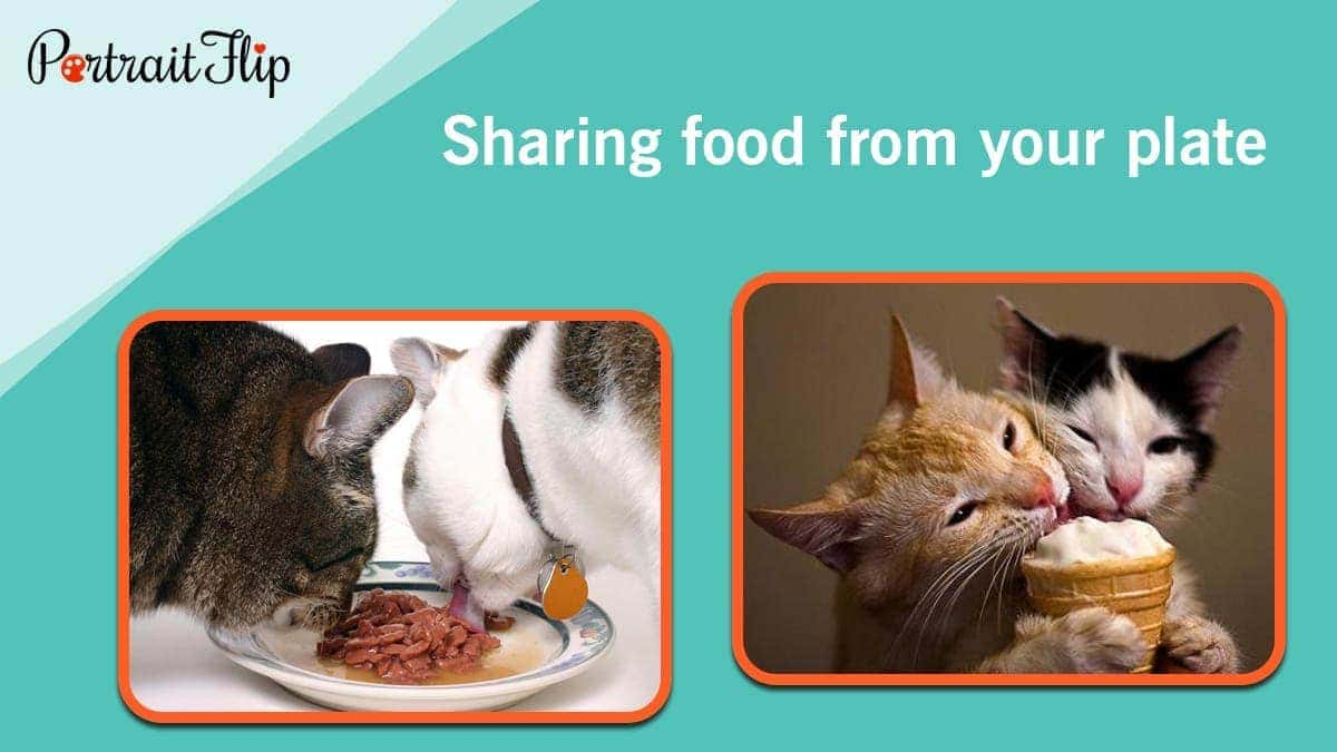 Sharing food from your plate