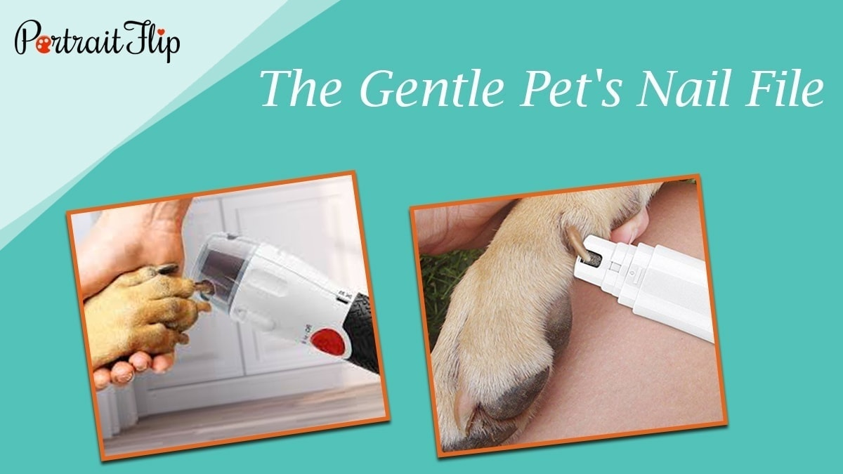 The gentle pet's nail file