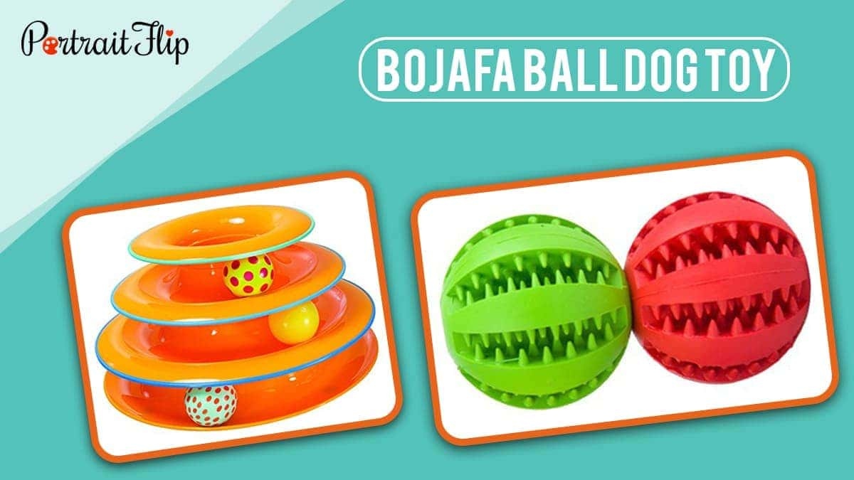 Bojafa ball dog toy