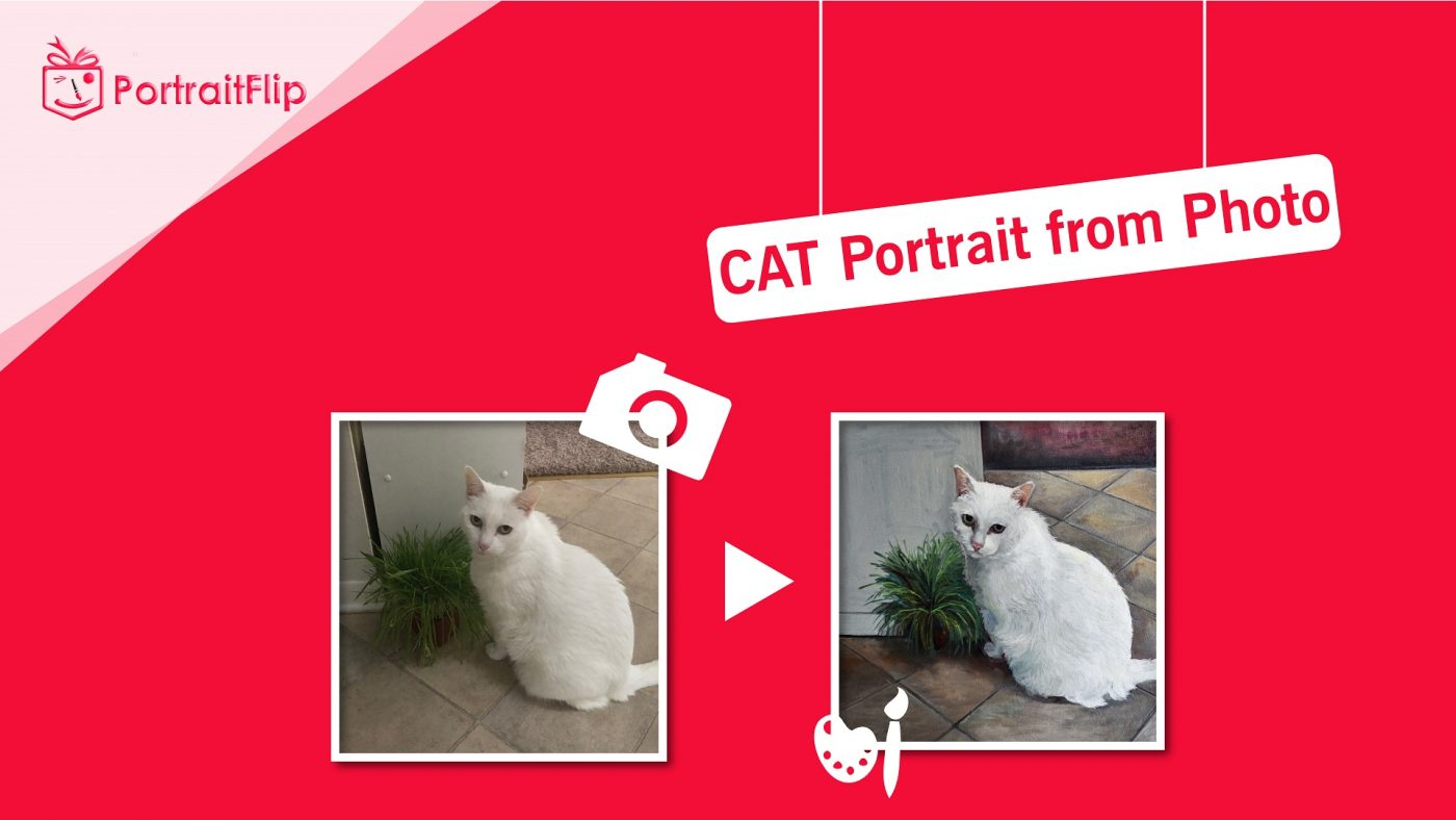 Cat from photo