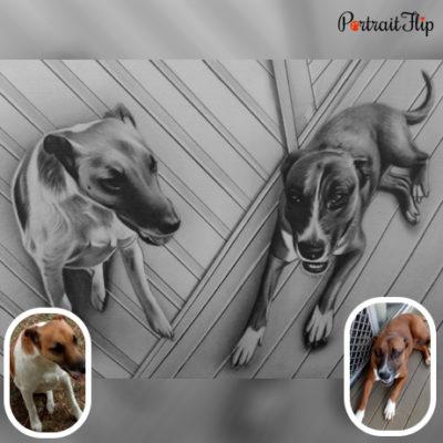 Dog gallery type