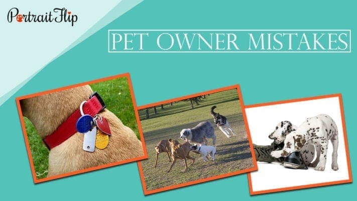 Pet owner mistakes