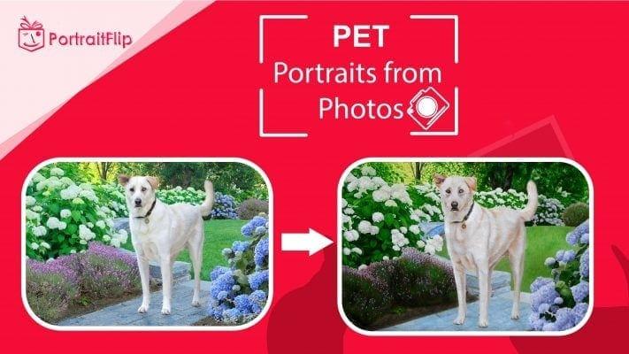 pet portrait from photos